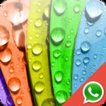 Les 5 meilleures applications de fonds d'écran pour WhatsApp